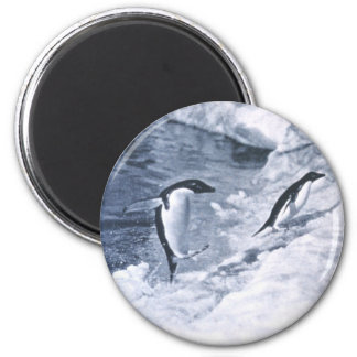 Penguins Jumping onto Land. 2 Inch Round Magnet
