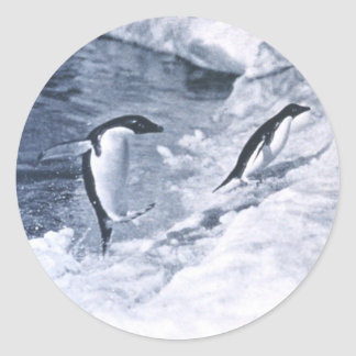 Penguins Jumping onto Land. Classic Round Sticker