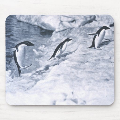 Penguins Jumping onto Land. Mouse Pad