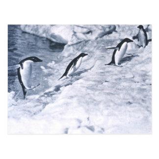 Penguins Jumping onto Land. Postcard