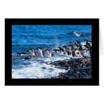 Penguins Leaping Cards