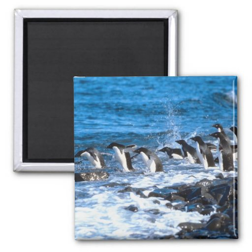 Penguins Leaping Magnet