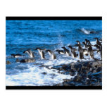 Penguins Leaping Post Cards