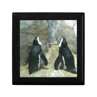 Penguins Looking Up Gift Box
