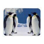 Penguins Magnet