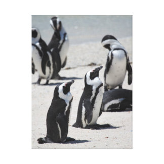 Penguins of South Africa Canvas Print