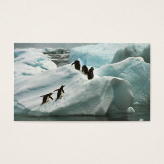 Penguins on a snow bank business card