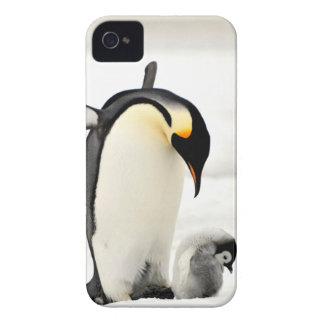 penguins photo iphone 4 case
