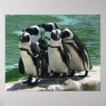 Penguins Photo Print