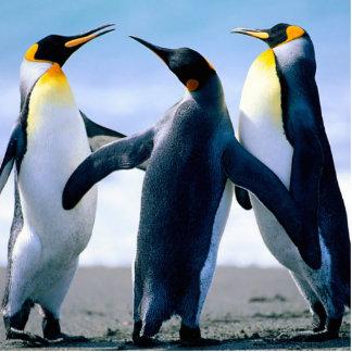 Penguins Cut Out