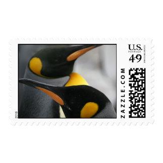 Penguins Postage Stamp