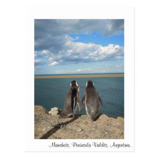 Penguins Post Cards