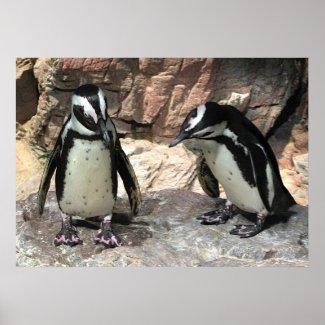 Penguins print