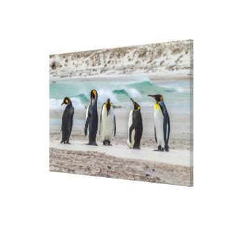 Penguins preening on beach canvas print