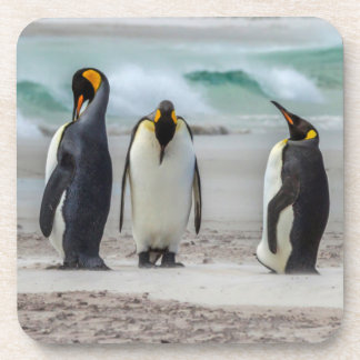 Penguins preening on beach coaster