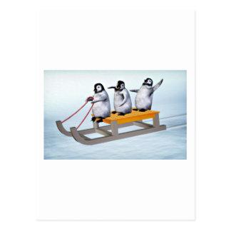 Penguins Sled Postcard