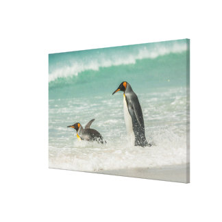 Penguins swimming on the beach canvas print