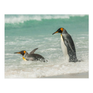 Penguins swimming on the beach postcard