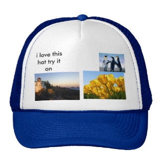 Penguins, Tulips, Lighthouse, i love this hat t...