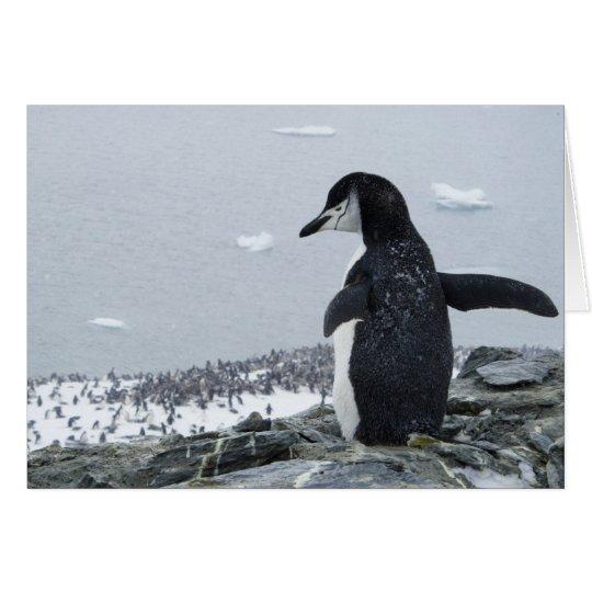 Penguinzilla Card