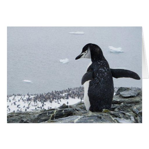 Penguinzilla Greeting Card
