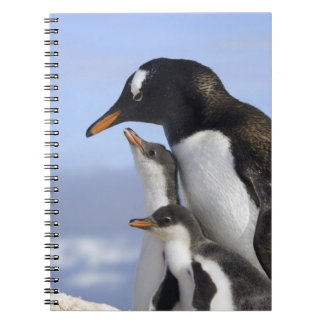 Península antártica, puerto de Neko, Gentoo Libros De Apuntes Con Espiral