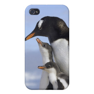 Península antártica, puerto de Neko, Gentoo iPhone 4/4S Carcasa