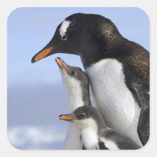 Península antártica puerto de Neko Gentoo Calcomanías Cuadradases