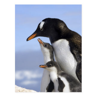 Península antártica, puerto de Neko, Gentoo Tarjetas Postales