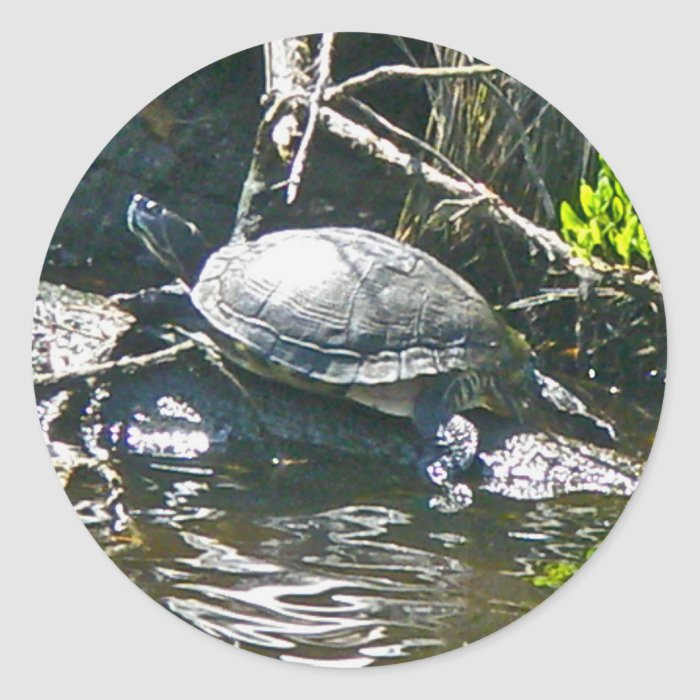 Peninsula Cooter (Pseudemys peninsularia) Turtle Classic Round Sticker
