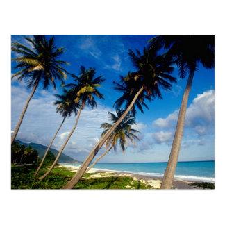 Península de Samana del La, República Dominicana, Tarjeta Postal