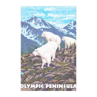 Península olímpica, cabras de WashingtonMountain Impresión En Lienzo