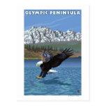 Península olímpica, WashingtonFishing Eagle Postales