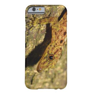 Peninsular Rock Gecko iPhone Case