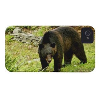 Pennsylvania Black Bear iPhone 4 Case-Mate Case