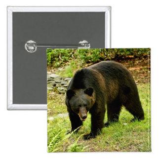 Pennsylvania Black Bear Pinback Button