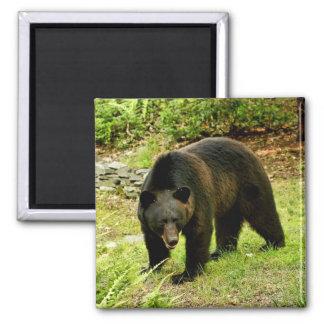 Pennsylvania Black Bear Refrigerator Magnets