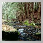 Pennsylvania Stream 03 Print