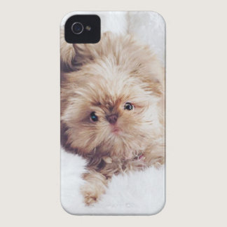 Penny the orange liver Shih Tzu on Cloud 9 iPhone 4 Case