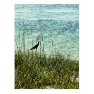 Pensacola Shore Bird Postcard