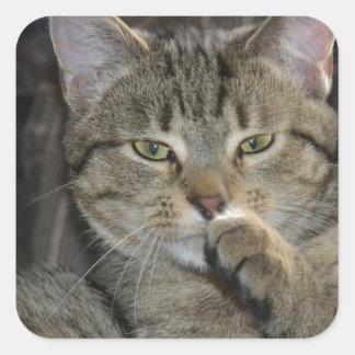 Pensamiento agradable del gato del gatito pegatina cuadrada