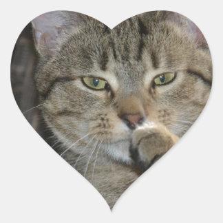 Pensamiento agradable del gato del gatito pegatina en forma de corazón