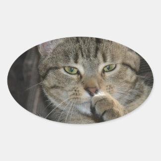 Pensamiento agradable del gato del gatito pegatina ovalada