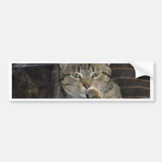 Pensamiento agradable del gato del gatito pegatina para auto