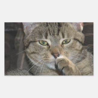 Pensamiento agradable del gato del gatito pegatina rectangular