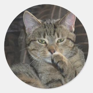 Pensamiento agradable del gato del gatito pegatina redonda