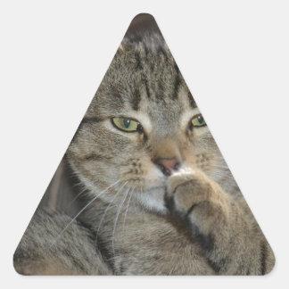 Pensamiento agradable del gato del gatito pegatina triangular