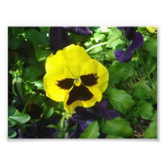 Pensamiento amarillo fotografia