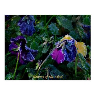 Pensamiento azucarado, flores de la mente tarjetas postales