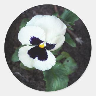 Pensamiento blanco precioso pegatina redonda